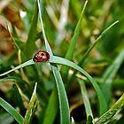 Lady Bug by Anita Ciancio