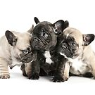 Frenchie Pals by Andrew Bret Wallis