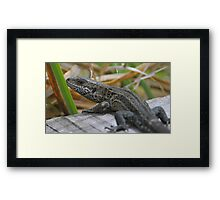 common lizard: and on the boardwalk there maybe dragons Framed Print