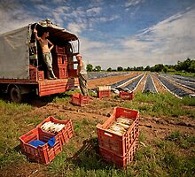 The Spargel Pickers by Boston Thek Imagery