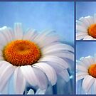 Daisy Collage by debbiedoda