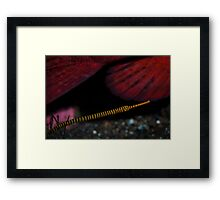 Pipe fish  Framed Print