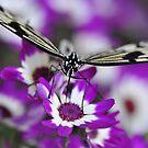 Purple Refueling Station - Caper White by Darren Bailey LRPS