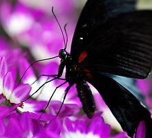 Flower Power by Darren Bailey LRPS