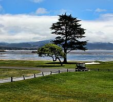 18th At Pebble Beach by Judy Vincent