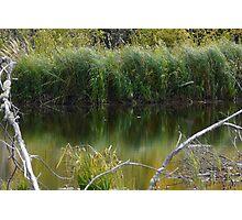 Wild Pond Grass Photographic Print