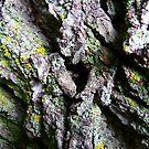 Tree Bark Art by MaeBelle