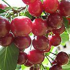 Magic cherries by Ana Belaj