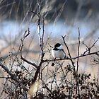 Little Chickadee by Alyce Taylor