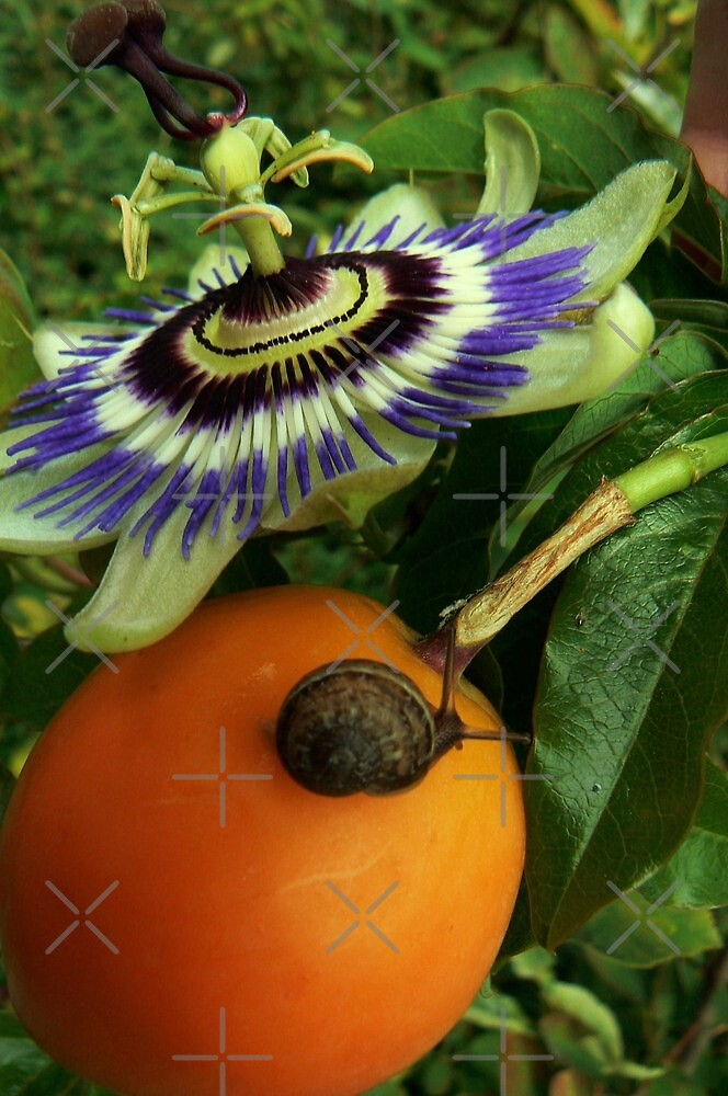 passie,fruit,snail by LisaBeth