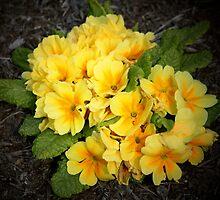 Yellow by timmyg69
