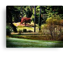 The Little Red Maple Canvas Print
