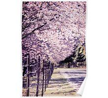 Flowering Cherries  Poster