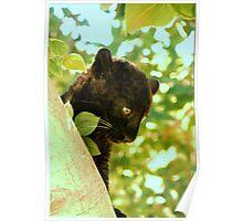 Black Leopard cub Poster