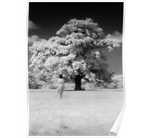 Infra-red tree Poster