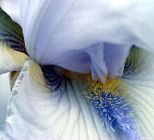 Iris 2 by Karl Eschenbach