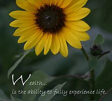 Wealth quote and yellow sunflower by PhotoCrazy6