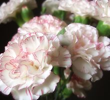 Almost White Carnations 5 by Christopher Johnson