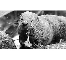 Lunch time otter style Photographic Print