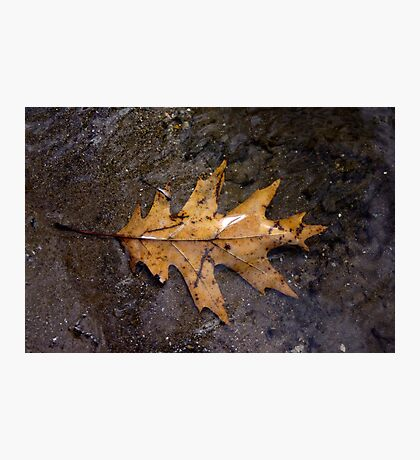 Fallen Leave in River Photographic Print
