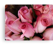PRETTY PINK ROSEBUDS Canvas Print