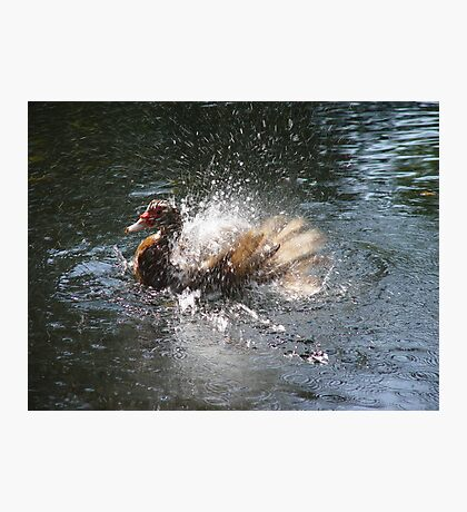 SPLISH, SPLASH, I WAS TAKIN' A BATH... Photographic Print