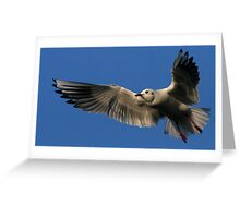 Flight Of The Gull Greeting Card