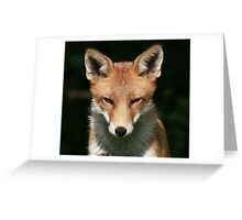 If Looks Could Kill - None Captive Greeting Card