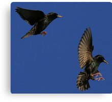 Flight Of The Starlings Canvas Print