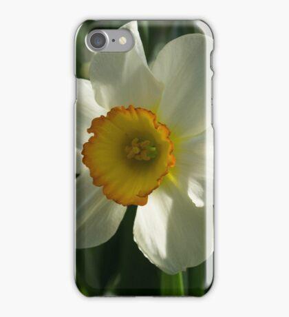 Poet's Daffodil Square iPhone Case/Skin
