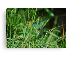 Damselflies 6 Canvas Print