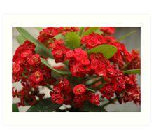 red euphorbia Art Print