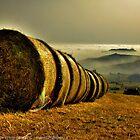 prospettiva agreste, con nebbia - Ciano - (zocca modena italy)_2544_Fl by primo masotti