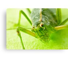 Grasshopper 65mm 2:1 Canvas Print