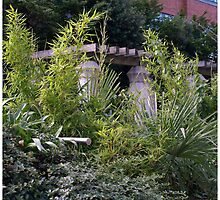 bamboo bush by AgaSilva
