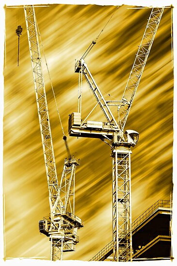 Cranes by Lea Valley Photographic