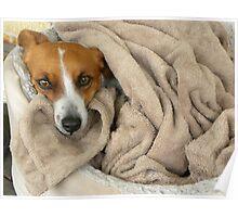 Cozy Little Pooch Poster