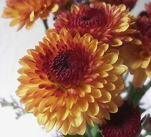 Brown and Gold Chrysanthemums 2 by Christopher Johnson