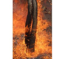 Fingers Of Fire Photographic Print