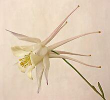 White Beauty by Priska Wettstein
