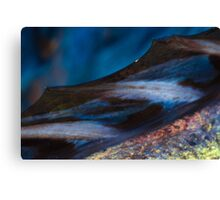 Abstract macro of barracuda fin and flesh Canvas Print
