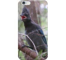 Stellar's Jay  iPhone Case/Skin
