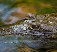 crocodile smile by paul erwin