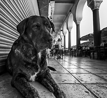 A cute stray dog relaxing by Antonis Lemonakis