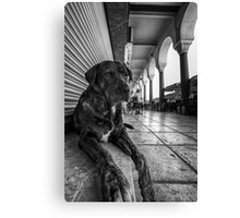 A cute stray dog relaxing Canvas Print