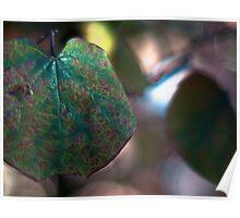 chameleonskin Poster