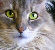 Green Eyed Glory by Taylor Katz