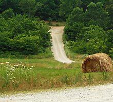 On the Back Roads of Arkansas by Susan Blevins