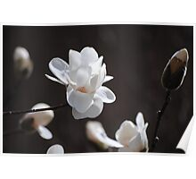 Magnolia Heaven Poster