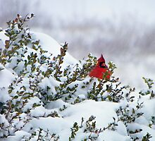 Waiting for a turn at the feeder by Robin Simmons